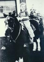 Mark on horse